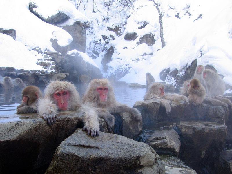 monkeys_in_hot_spring