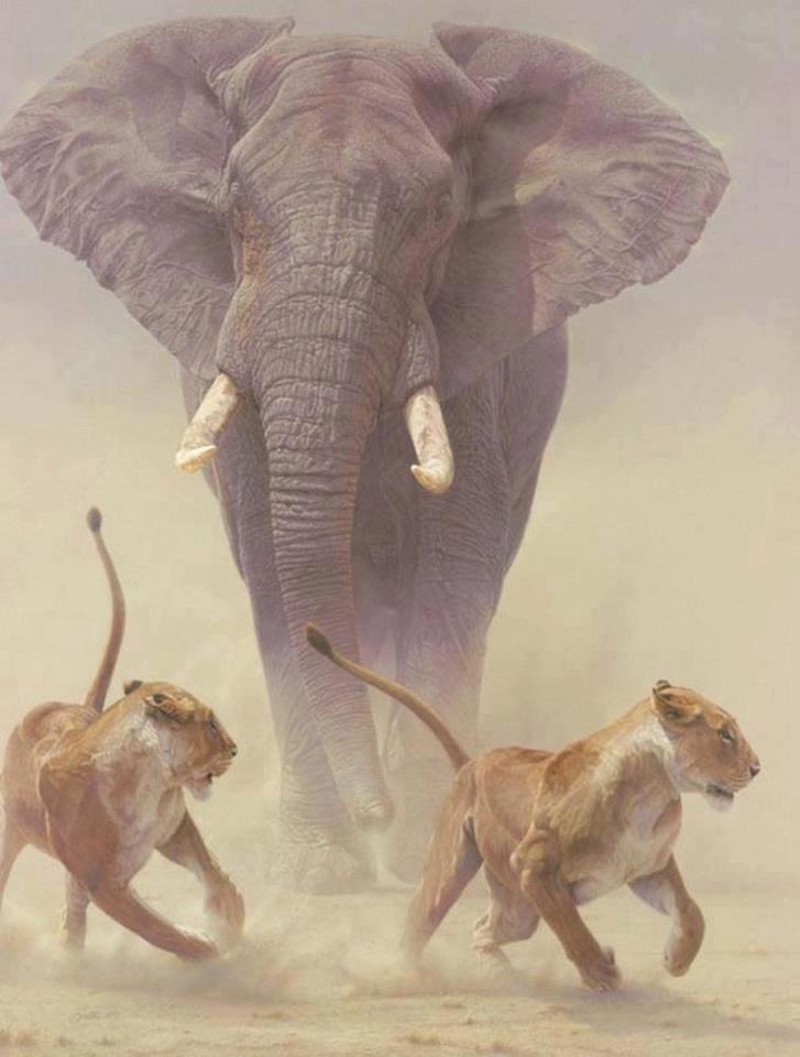 elephant_chasing_lions