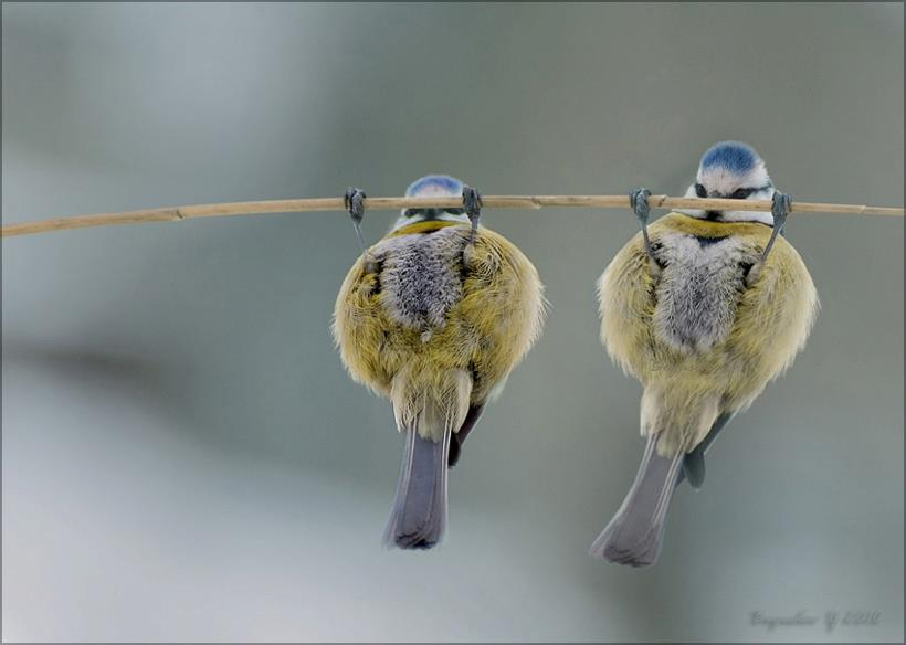 pullup_birds