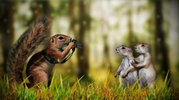 squirrel_photographer
