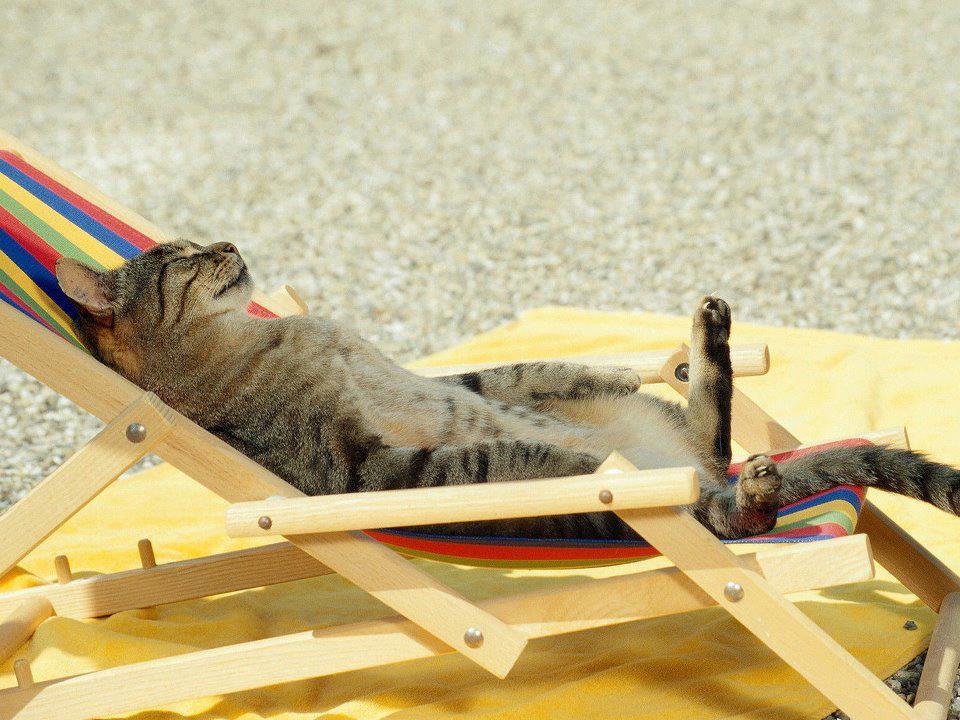 tanning_cat
