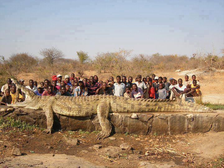 long_croc