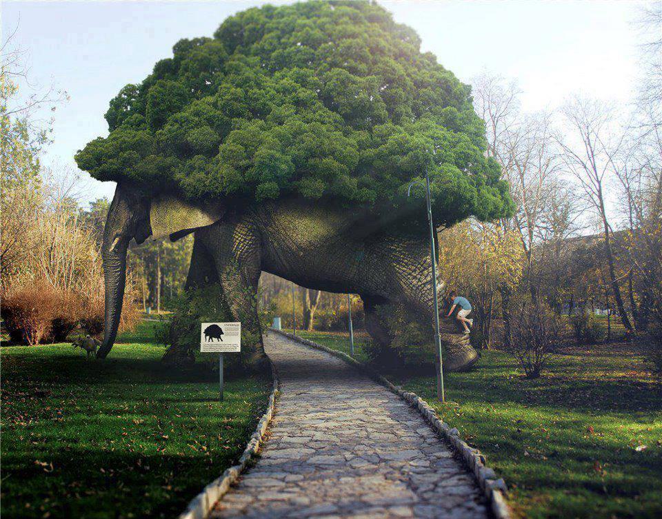 elephant_tree_arch