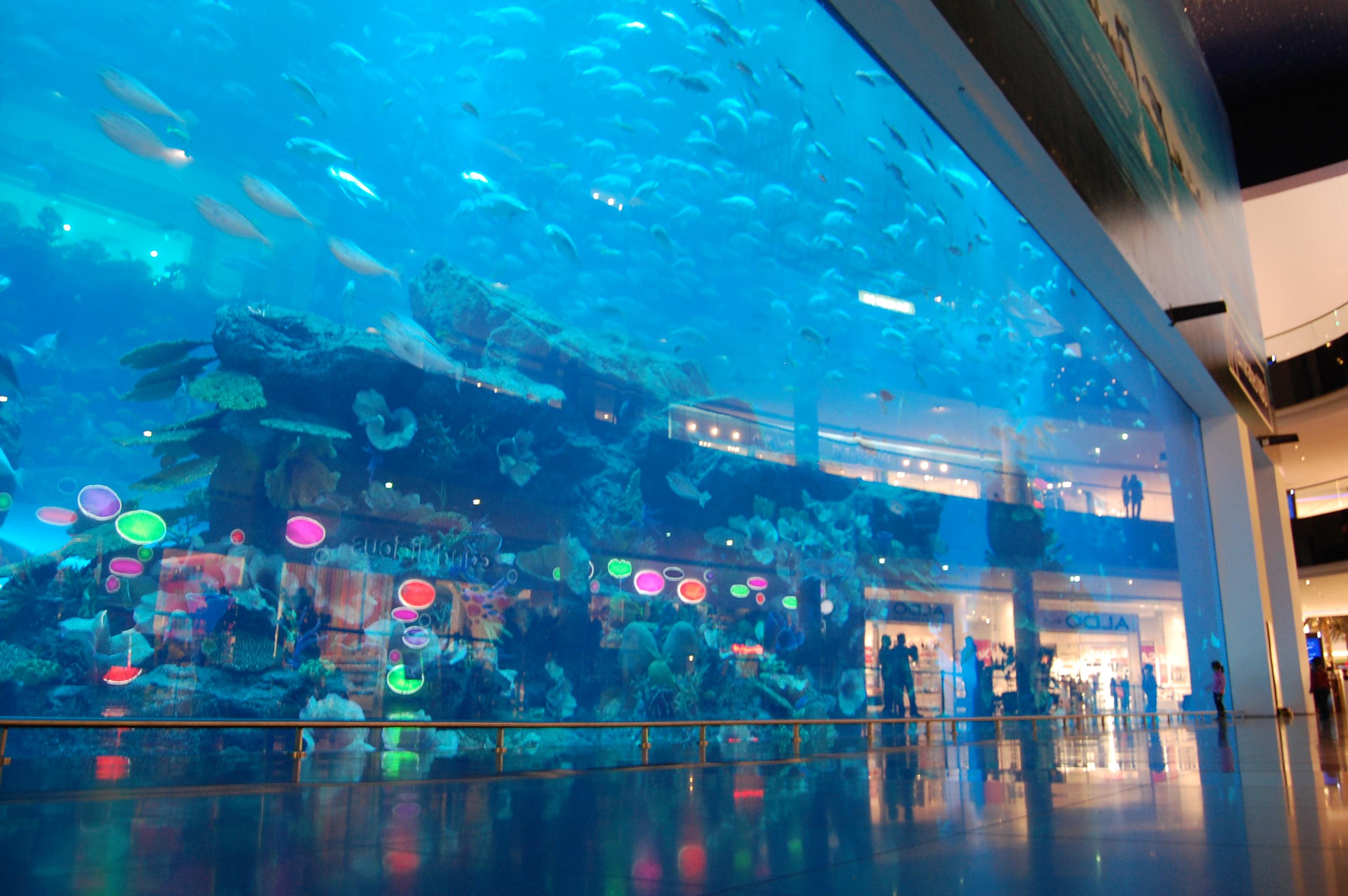 Dubai Aquarium Underwater Zoo Is One Of The Largest