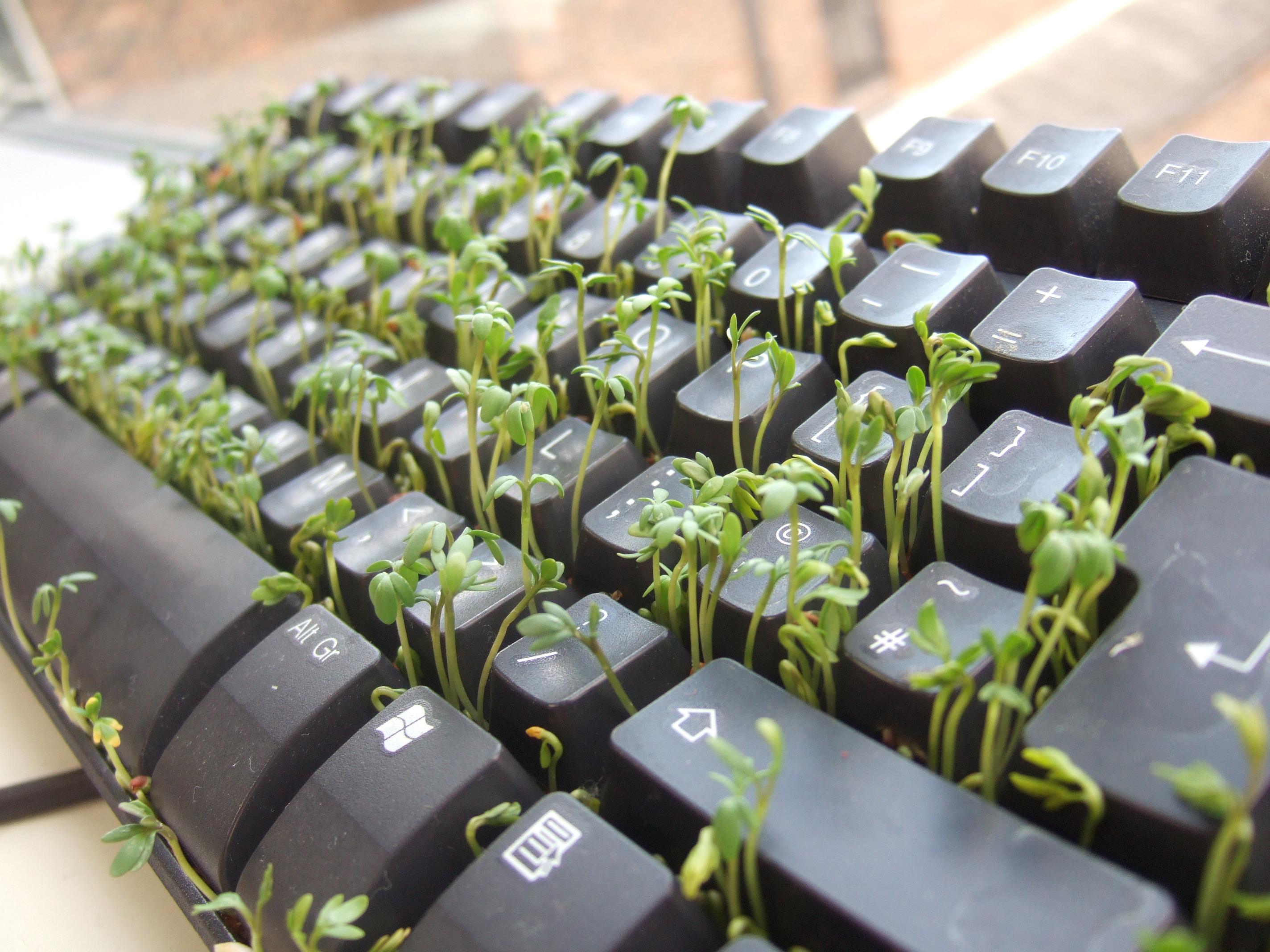 garden_cress_keyboard