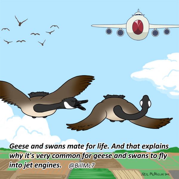 geese_swan_marriage_comic