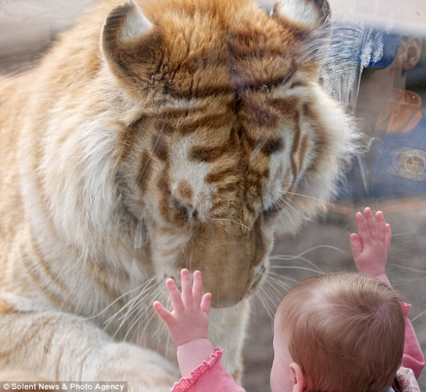 tiger_girl_3
