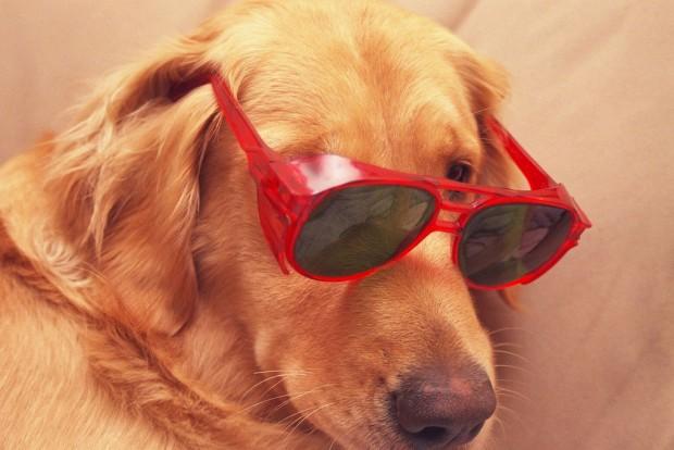 dogchip