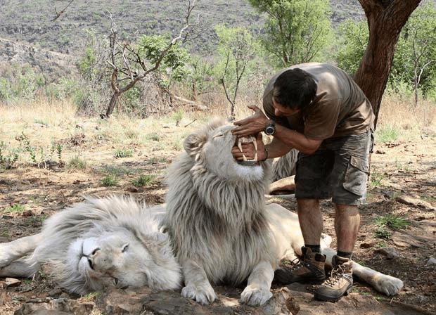 lion_whisperer_5