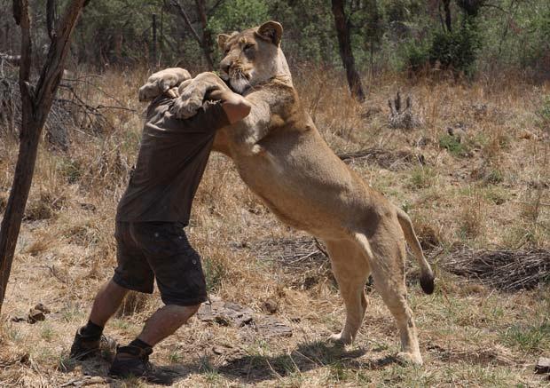 lion_whisperer_7