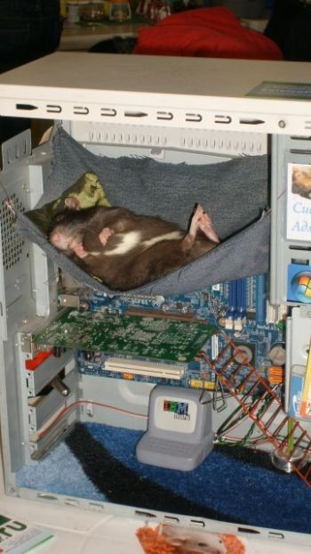 sleeping_power_supply