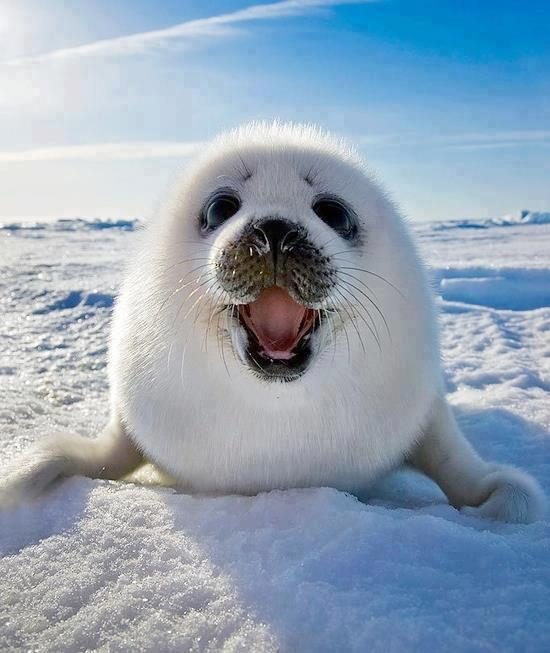 happy_seal