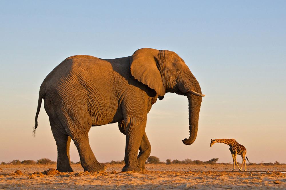 huge_elephant