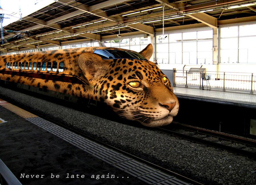 leopard_train