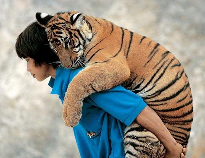 tigerback_ride