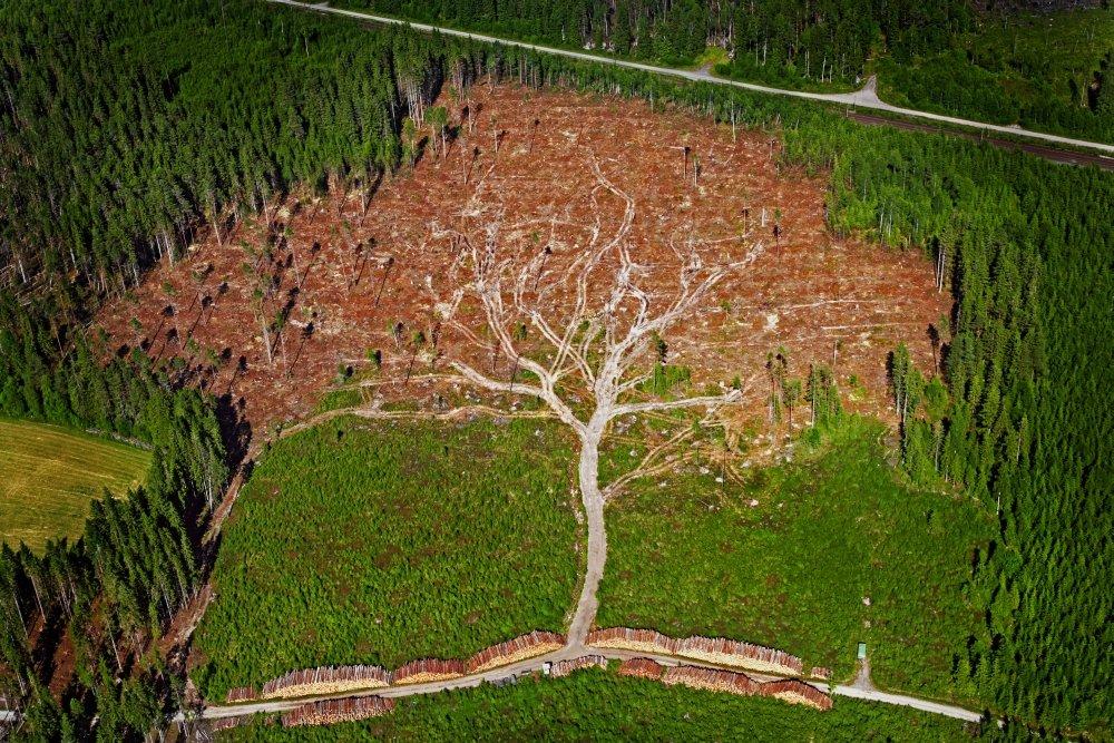 tree_shaped_tree_loggers