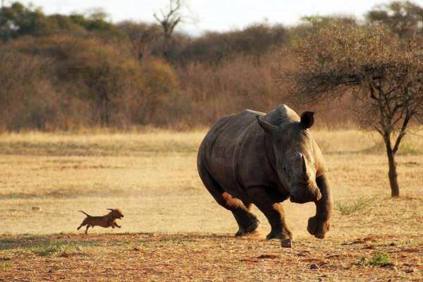 dog_vs_rhino