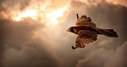 falcon_flight_2560x1440