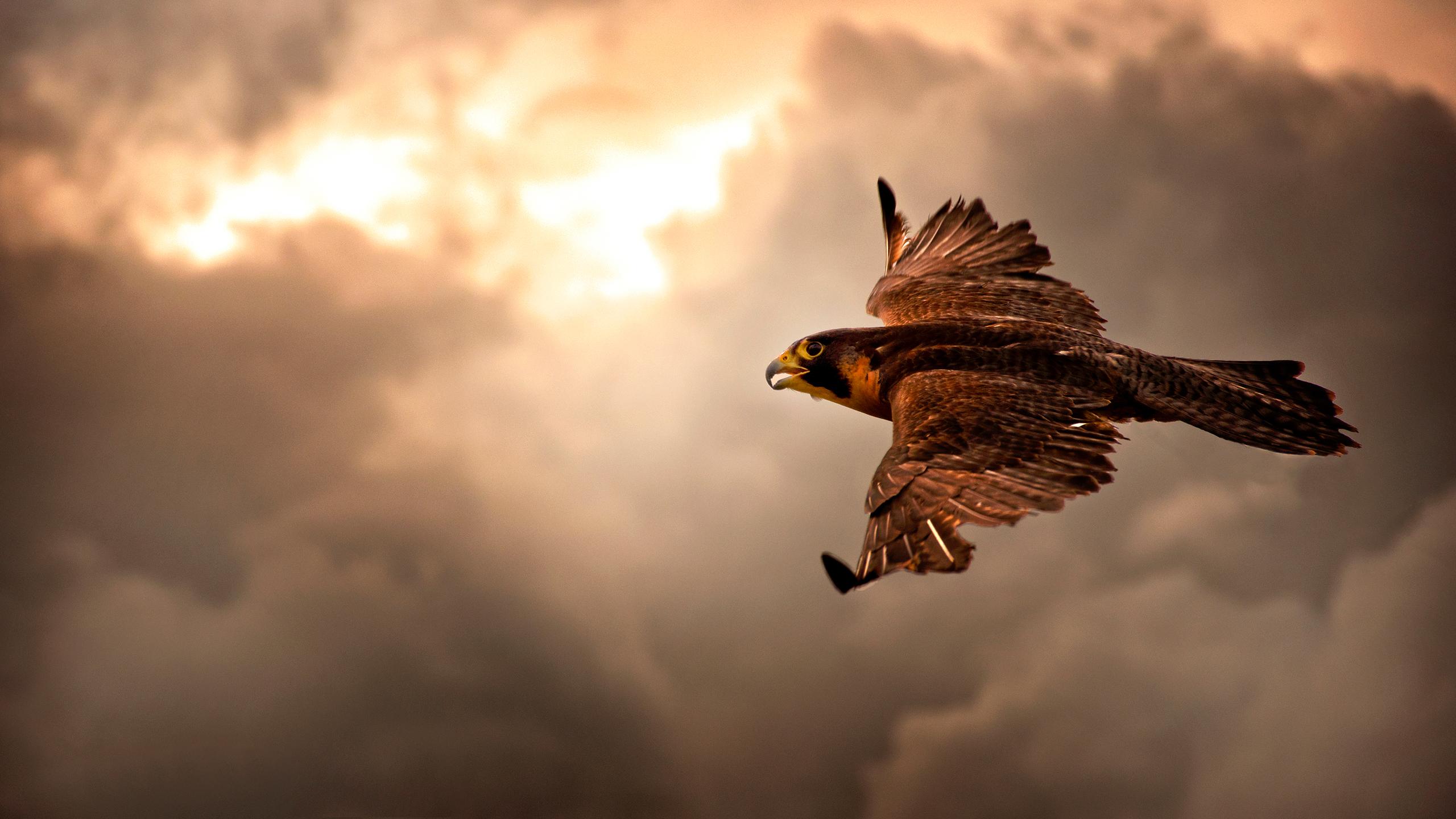 falcon_flight_2560x1440