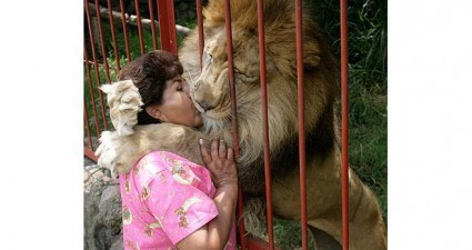 lion_kissing