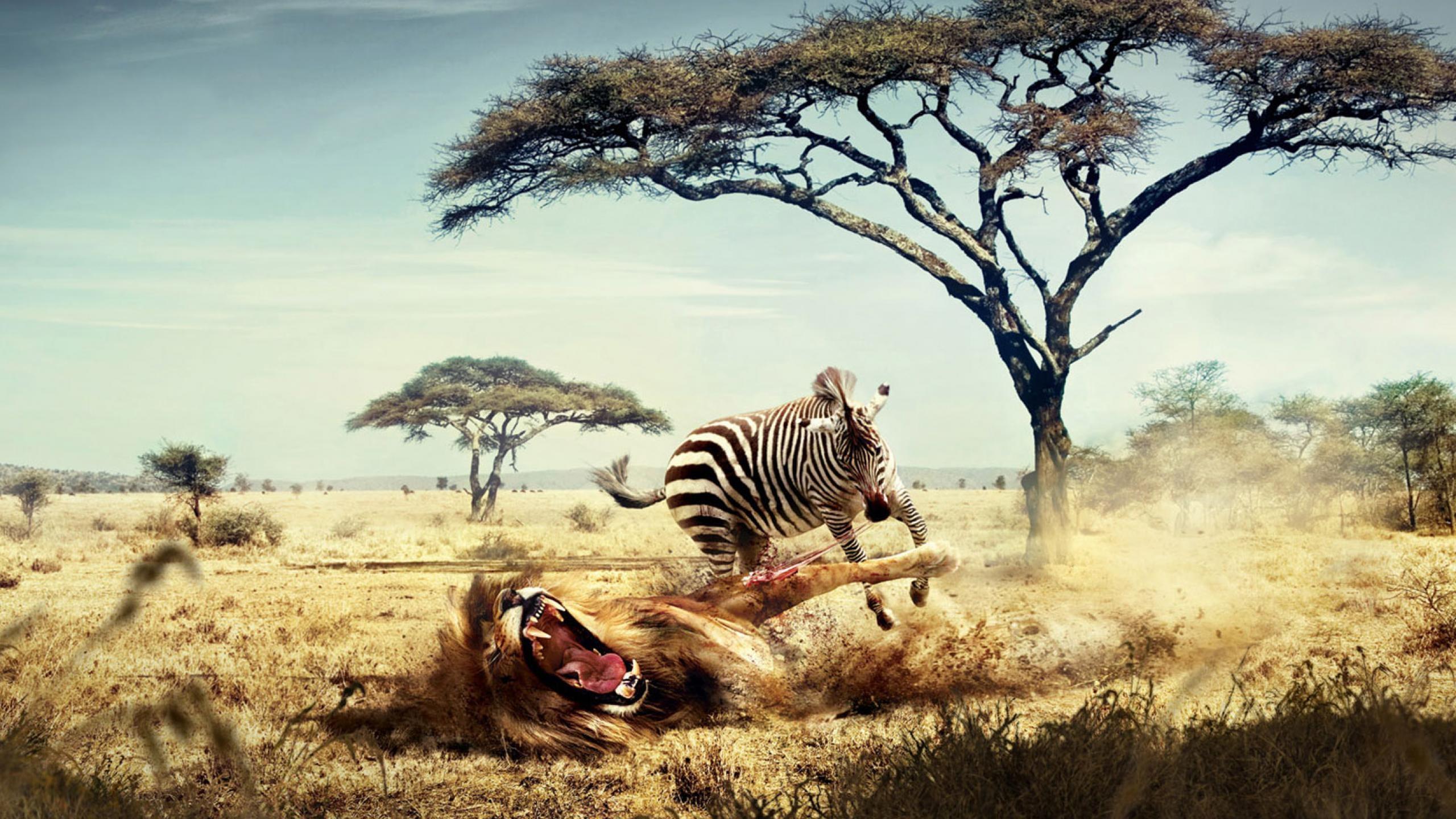 lion_vs_zebra