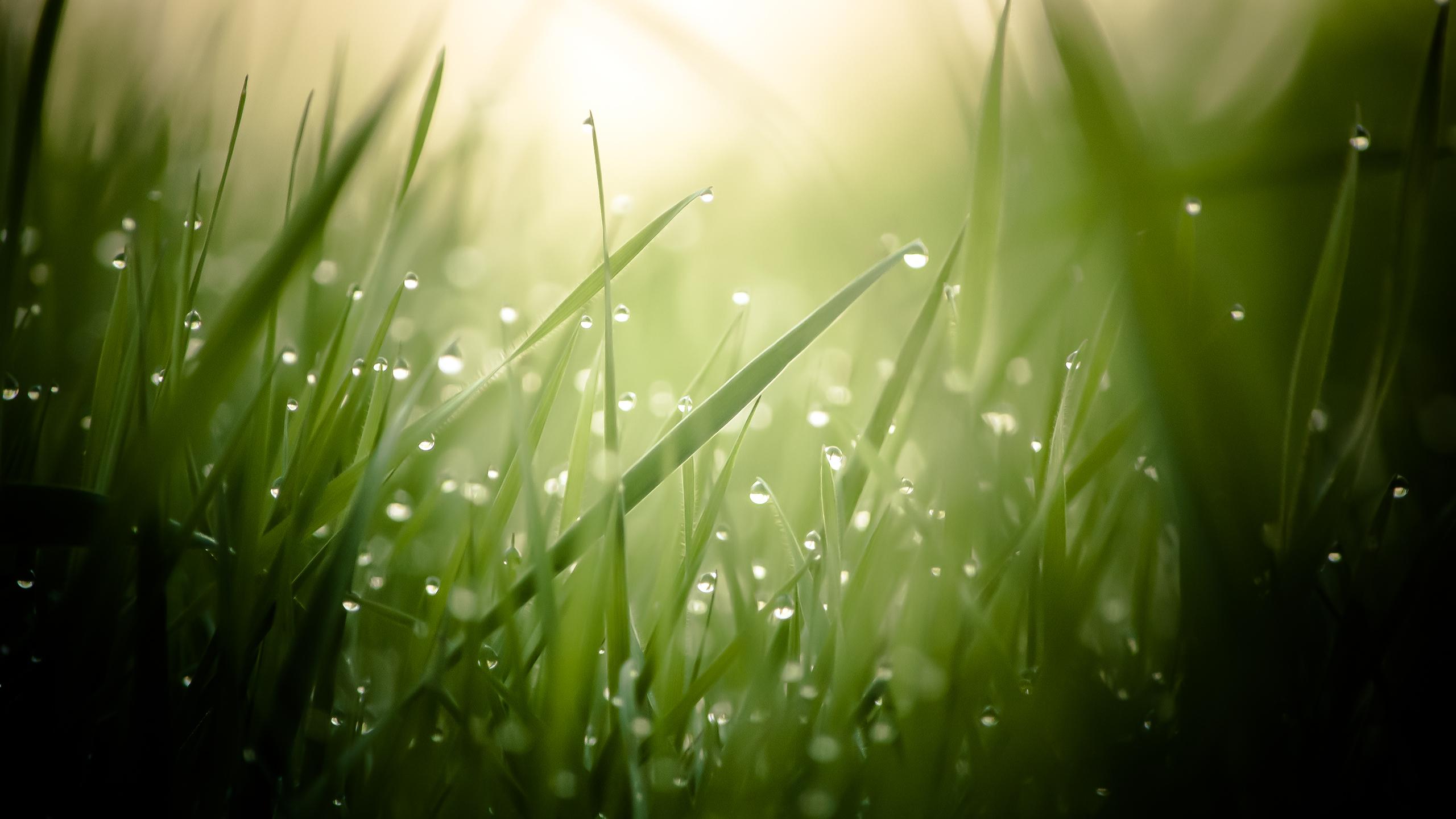 morning_dew