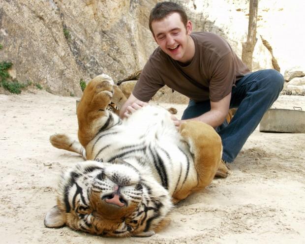 tickling_a_tiger