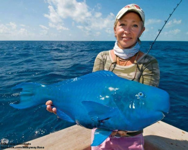 blue_fish