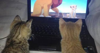 cats_watching_lion_king