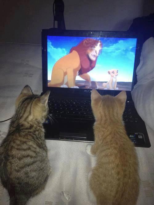 cats_watching_lion_king