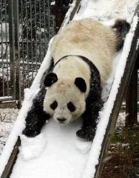 panda_slide