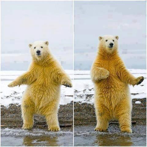 dancing_bear