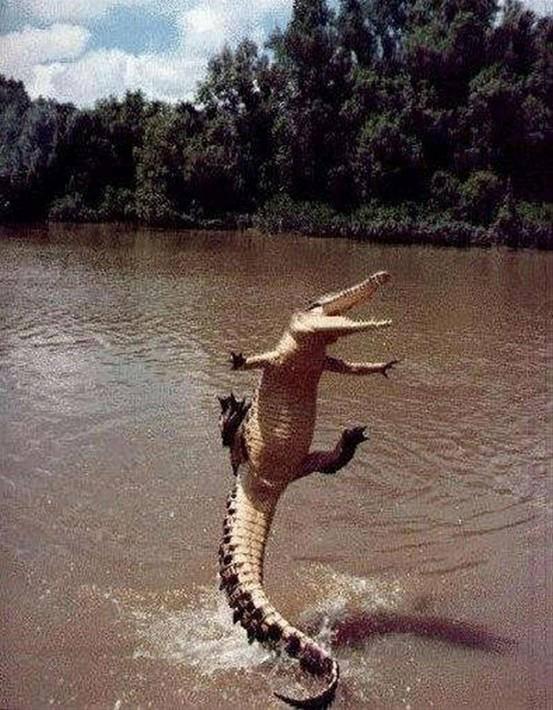 happy_crocodile