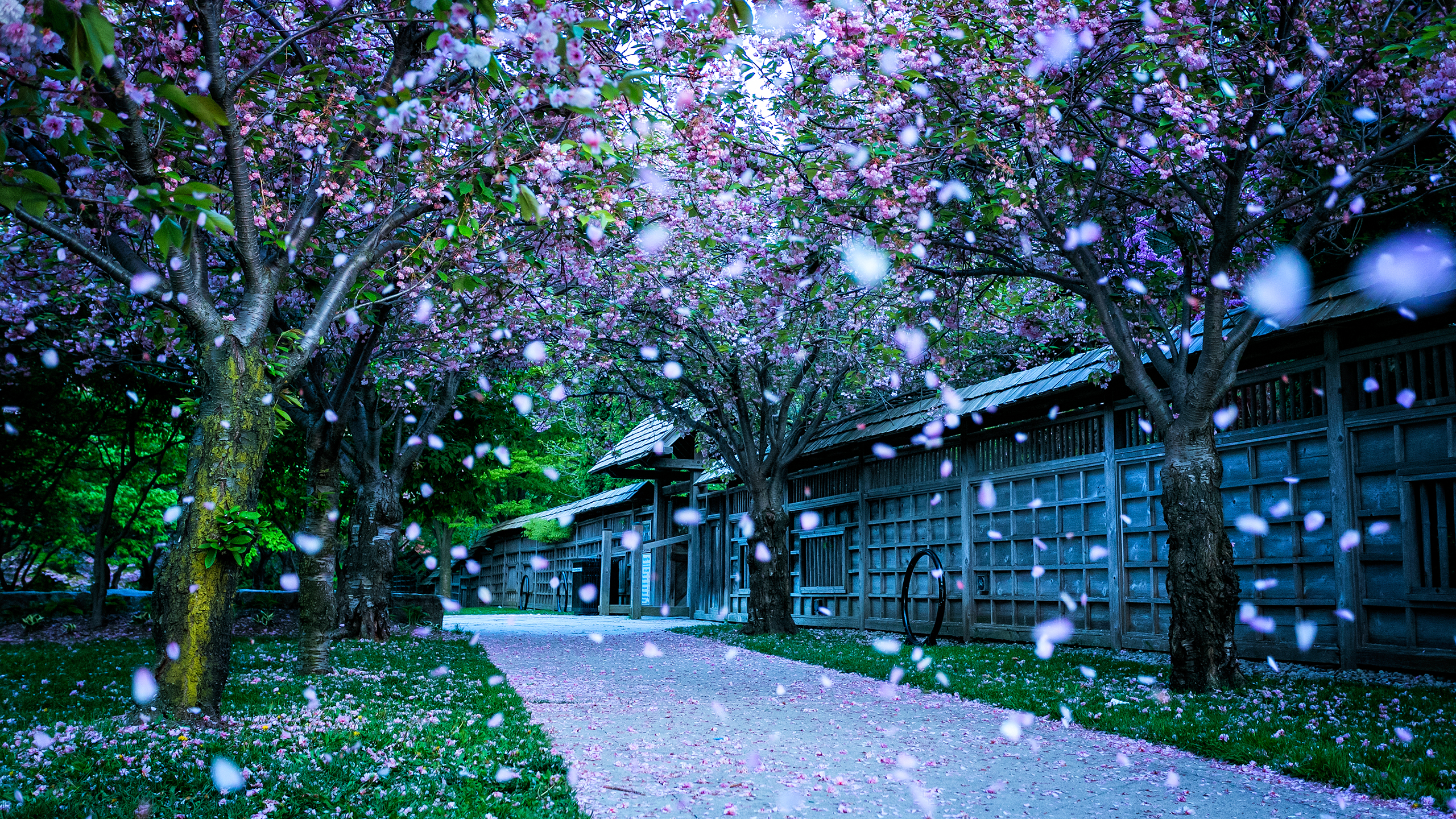 kariya_park_2560x1440