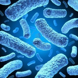 12668156-bacteria-and-bacterium-cells-floating-in-microscopic-space