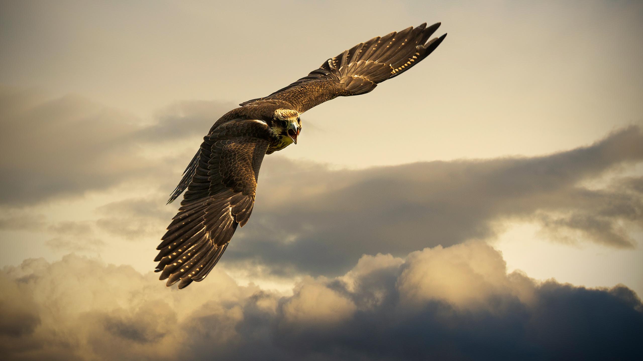 angry_bird_wallpaper_2560x1440