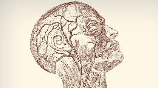 face-blood vessels