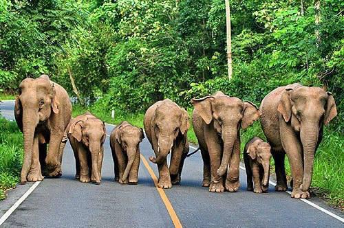 family_of_elephants