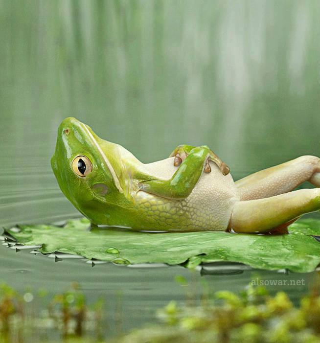 happy_frog