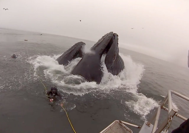 hungry_whales