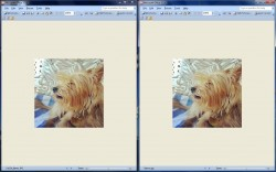 TinyPic images side by side