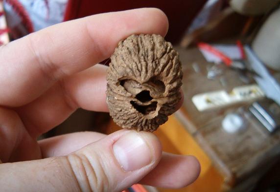 chewie_walnut
