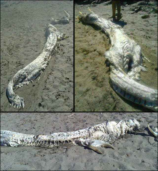 dead_dragon_on_beach