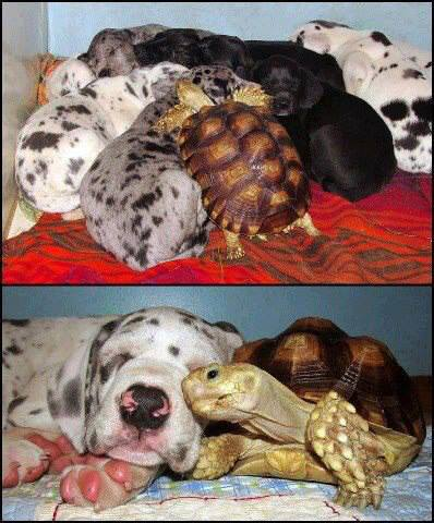 dog_turtle_family
