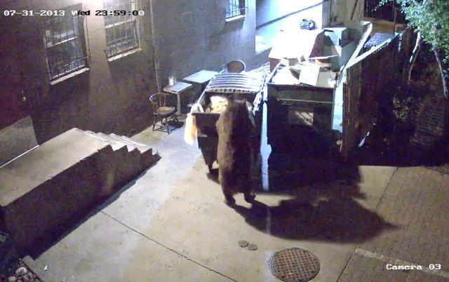 dumpster_stealing_bear