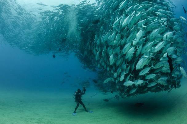 fish_tornado