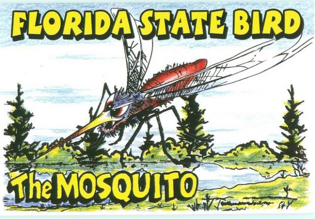 florida mosquito