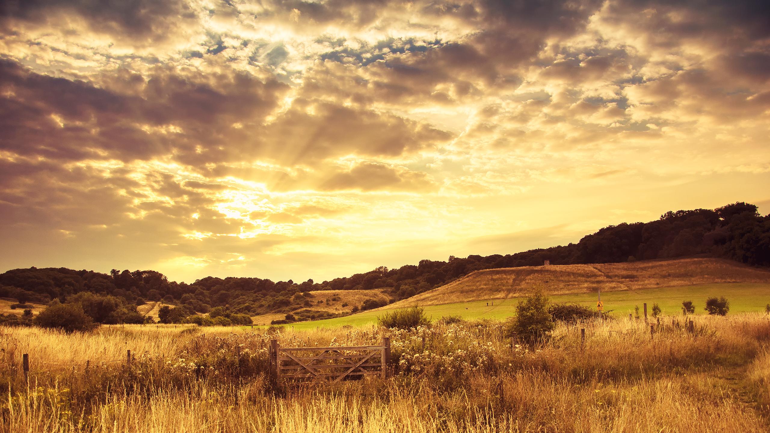golden_sunset_wallpaper_2560x1440