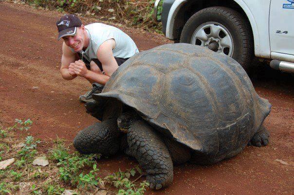 large_tortoise