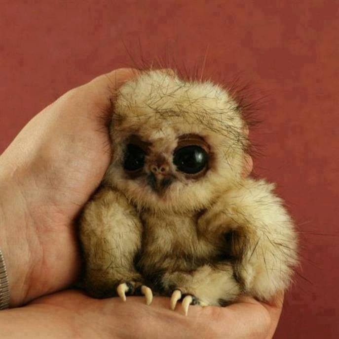 not_furby_but_looks_like_one